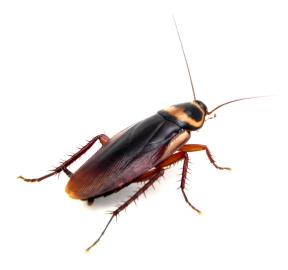 Cockroach Exterminator Dallastown PA 2