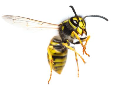 Bee Exterminator Red Lion PA Wasp Exterminator Red Lion PA 2